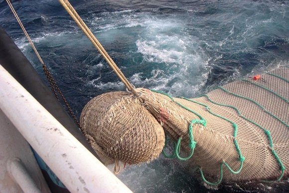 netting-and-D12-pelagic-trawling